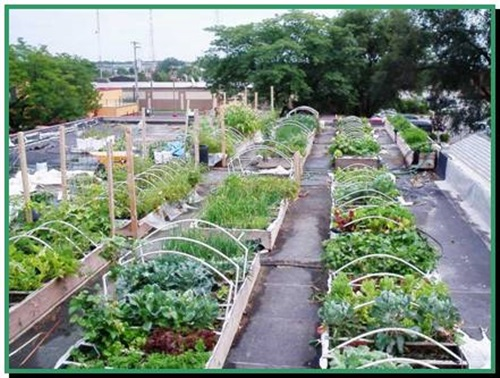 How to create a rooftop garden interior design for Creating a vegetable garden