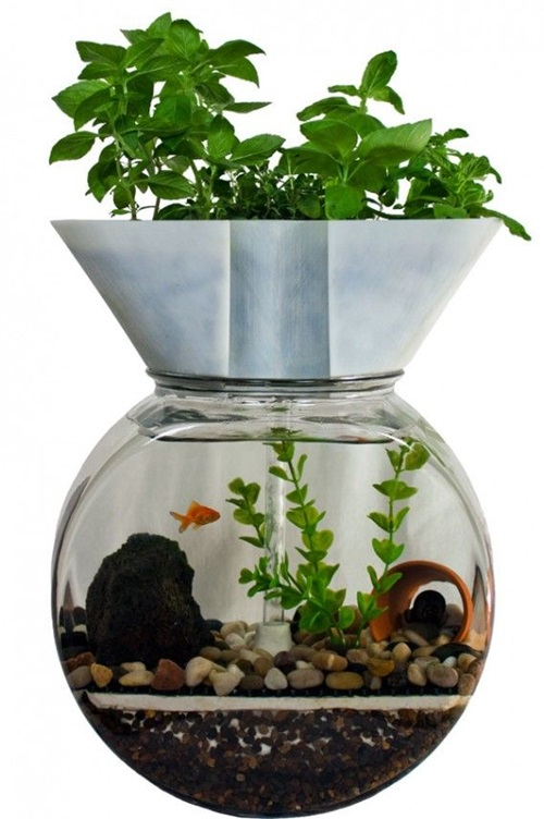 Designing a Fish Aquarium by yourself