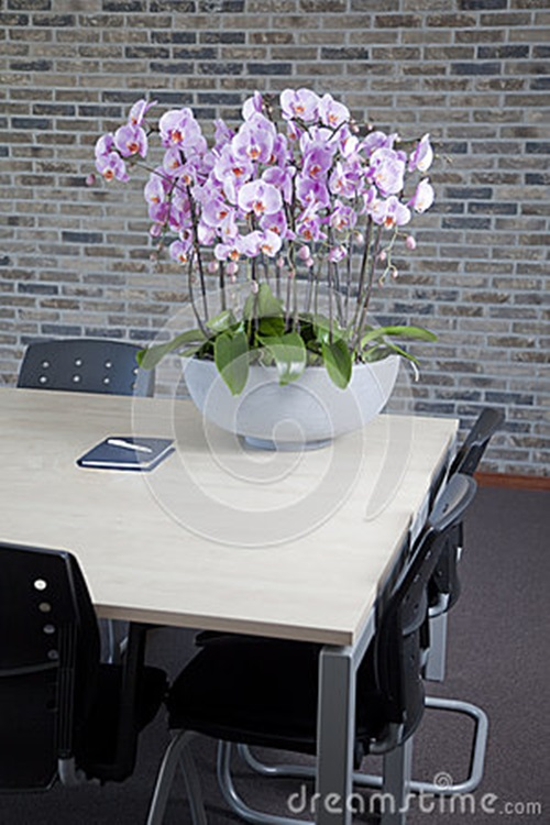 How to Decorate Your Home Interior with Orchid Flowers