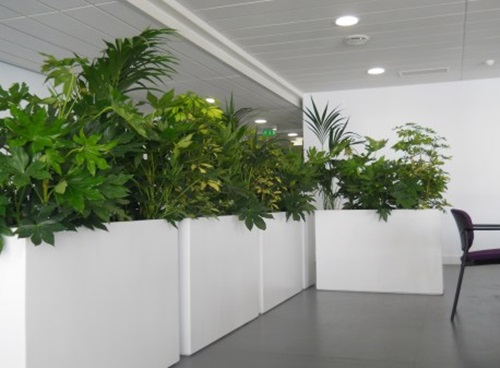 Innovative Indoor Planter Design Ideas