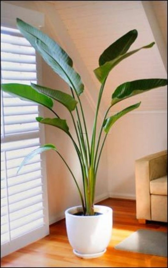 Indoor Plants Beautiful Plants For Amazing Indoor Decoration Interior Design