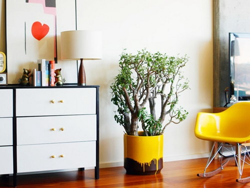 The right plants to decorate your home