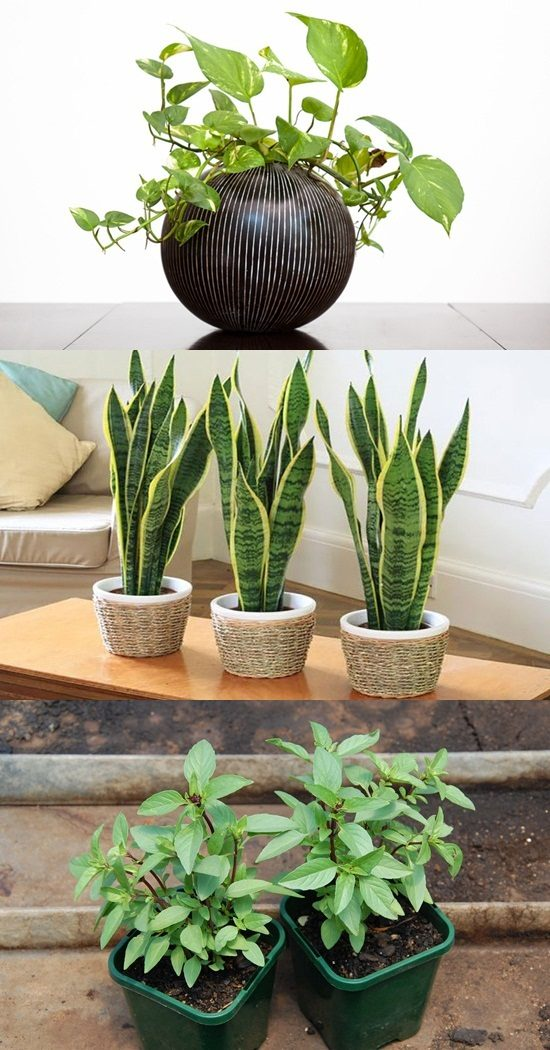 Keep your home healthy and safe by adding beautiful indoor plants