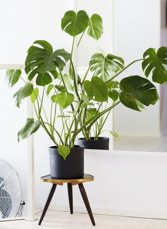 Indoor Plants – How to Decorate Your Home with Air-Purifying Indoor Plants