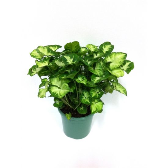 xindoor plants  u2013 how to decorate your home with air