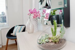 Indoor Plants - Beautiful Plants for Amazing Indoor Decoration