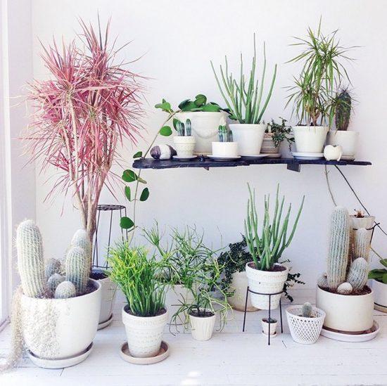 Indoor Plants Beautiful Plants For Amazing Indoor Decoration