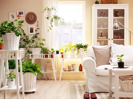 Indoor Plants - Beautiful Plants for Amazing Indoor Decoration